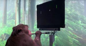 neuralink scimmia pong